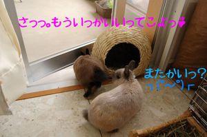 Sdsc_0024_4